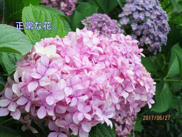 IMG_0058_20170628064530812.jpg