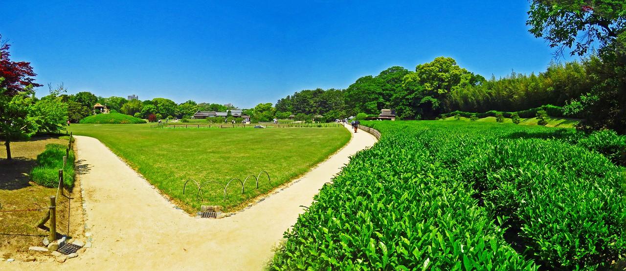 20170520 後楽園今日の園内新殿付近から眺めた茶畑前のワイド風景 (1)