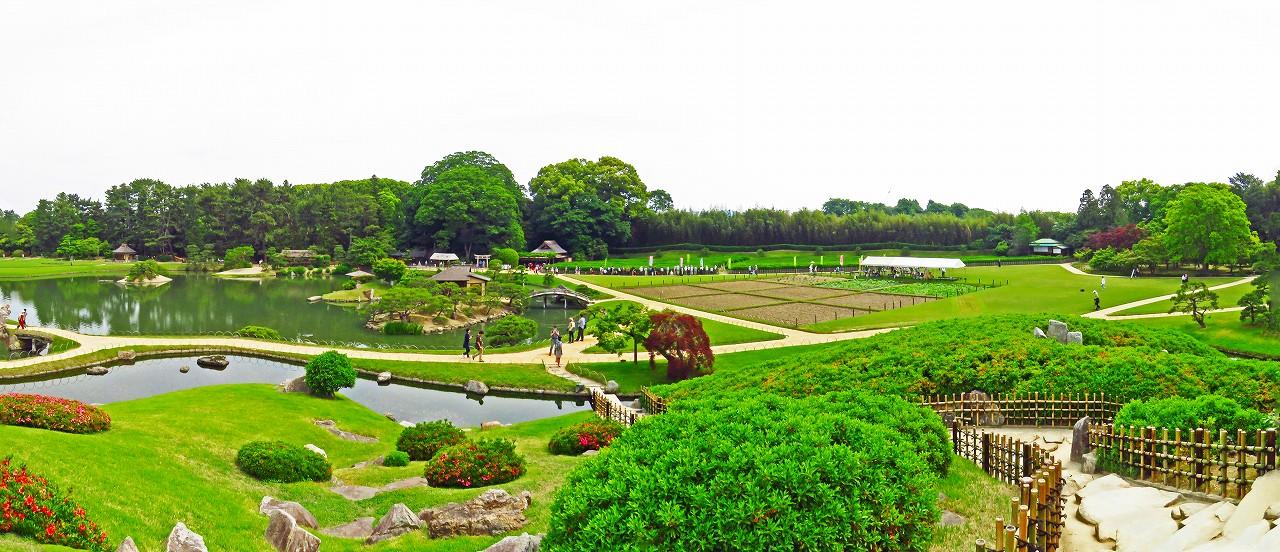 20170521 後楽園今日の茶つみ祭の日の準備中の会場茶畑ワイド風景 (1)