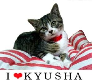 kyusha.jpg