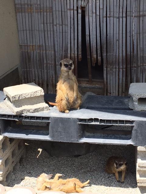 大森山動物園 ミーヤキャット