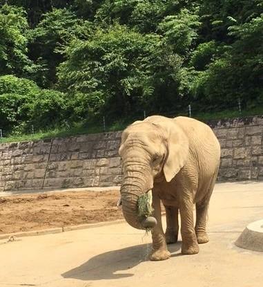 大森山動物園 ぞう