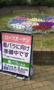170503_京成バラ園