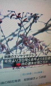 170515_釧路で桜