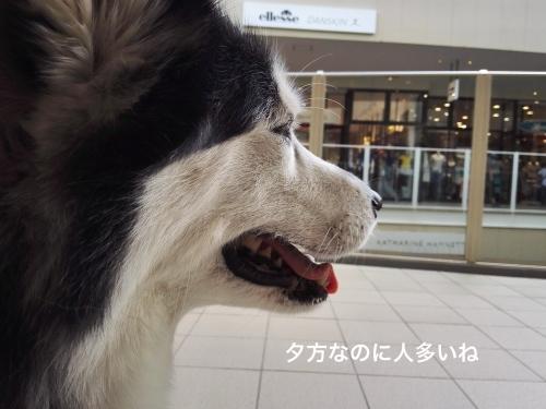 IMG_20170604_172459_Fotor.jpg