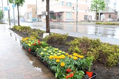 _リタロード植栽2017-05-27 (1)