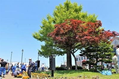 2017-06-06 紅志高校 駅前公園植栽 (21)