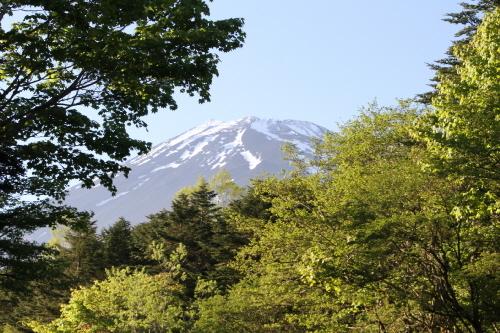 登山道の夏の葉