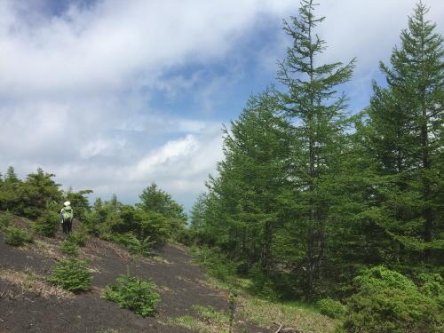 二ツ塚麓の森林限界
