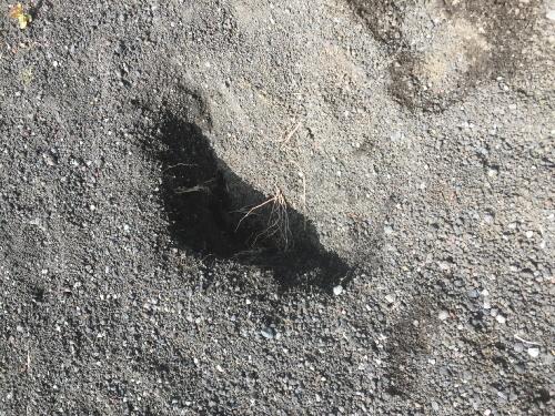 二ツ塚麓のウサギの穴