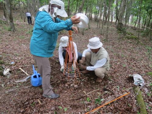 ブナの稚樹植栽1