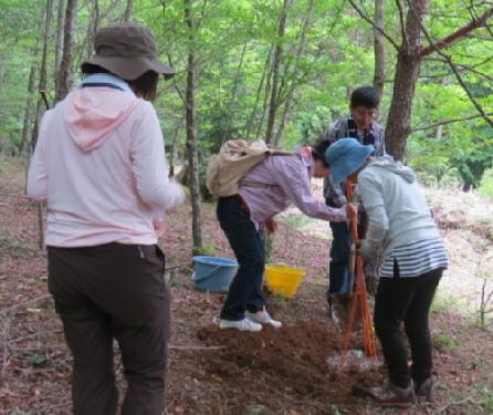 ブナの稚樹植栽2