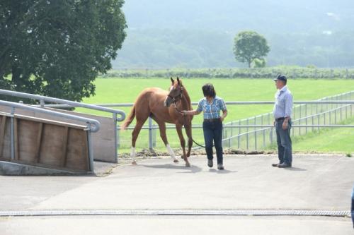 【競馬ネタ】乗馬経験者ならわかると思うが馬は人のこと見て真面目に走るかサボるが決めるよ
