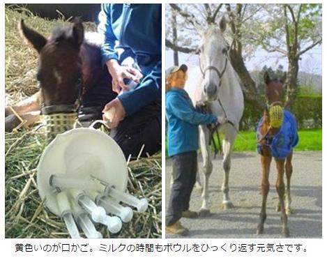 【競馬】ホエールキャプチャの当歳が競走馬として絶望的