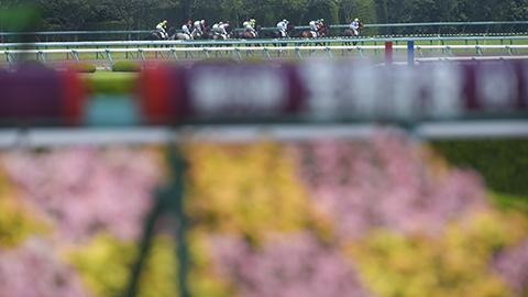 【宝塚記念】登録馬がたった11頭wwwwwwwwww