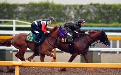 【競馬】オルフェーヴル、種牡馬大失敗の匂い