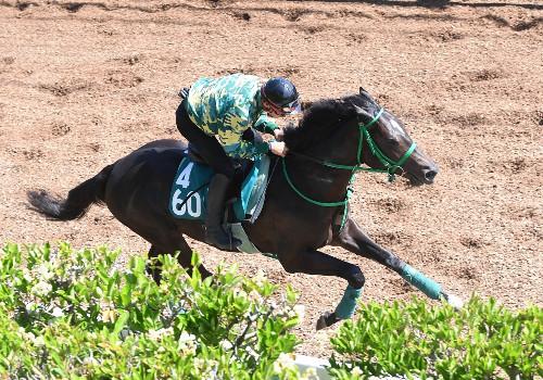 【競馬新馬】タニノフランケル 8月12日の新潟・芝1800メートルでデビュー
