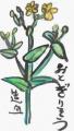 3絵手紙民間薬草 (7)