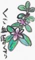 3絵手紙民間薬草 (8)