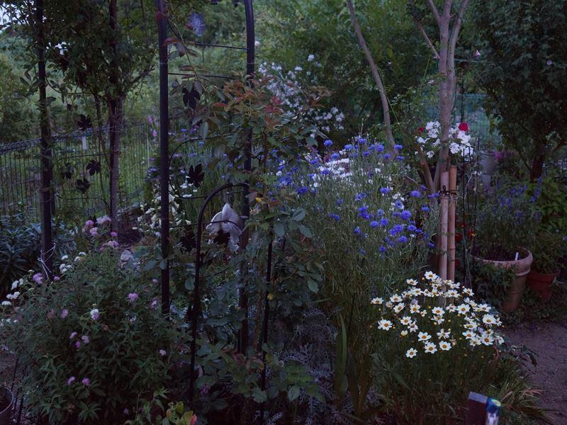 暮れゆく庭