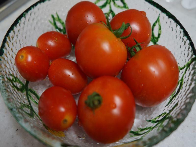 自家製トマト