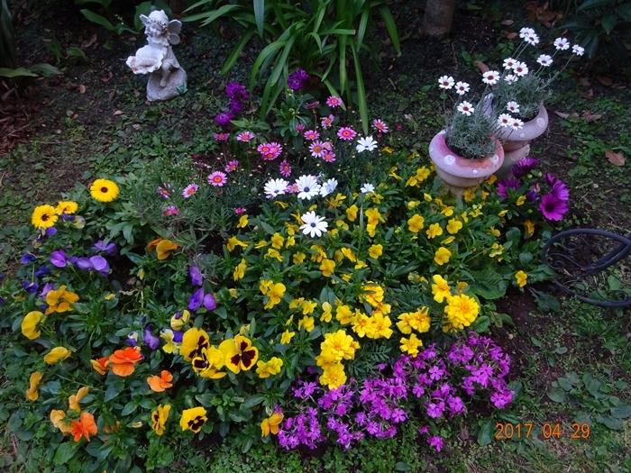 DSC08604鮮やかな色になった花