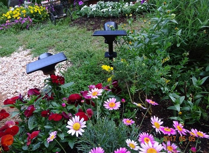 DSC08687私の庭2