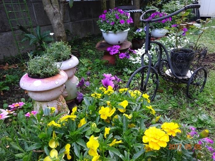 1DSC08691私の庭