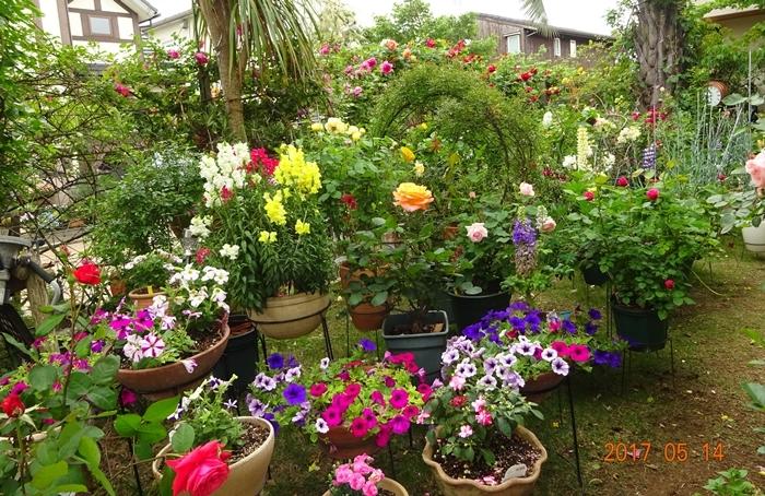 DSC08859バラの館の庭園