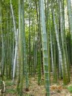 DSC08887庭内の竹藪