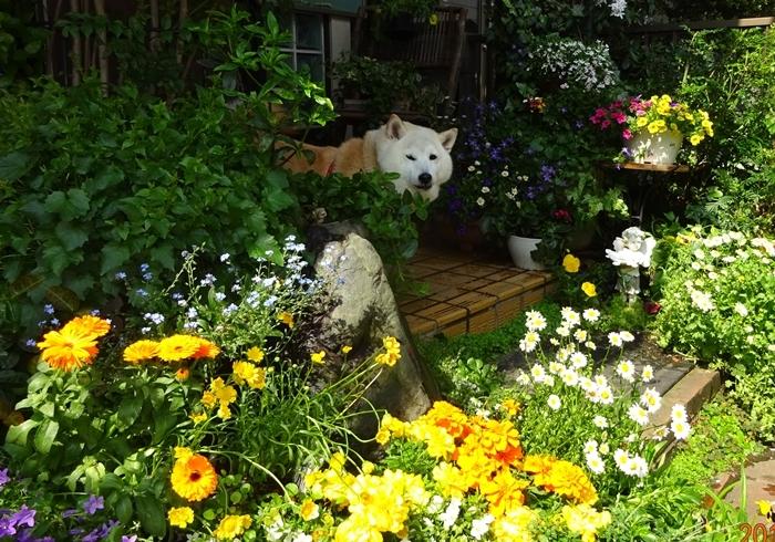 DSC08927花の中のカノン