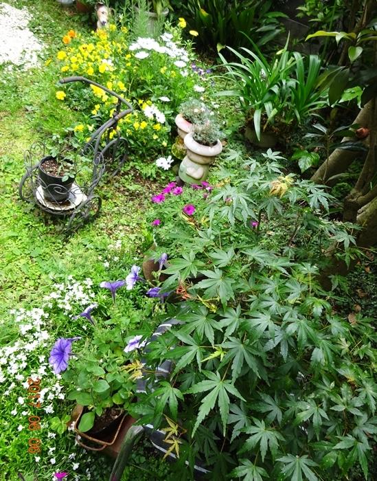 DSC09026六月の庭
