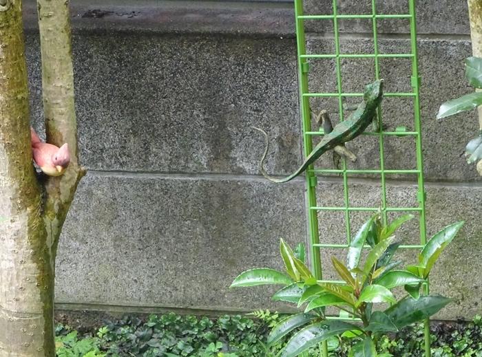 DSC09137トカゲと鳥