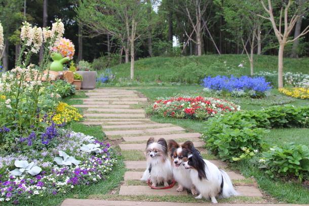 里山ガーデン 5月00014718