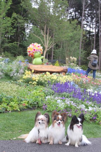 里山ガーデン 5月00014715