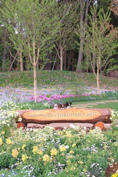 里山ガーデン00012041