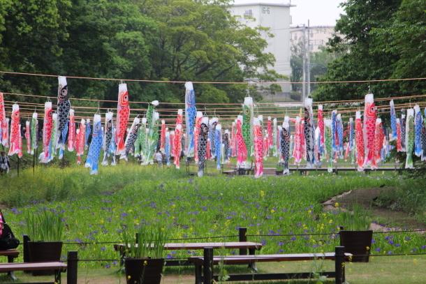 里山ガーデン 5月00014679