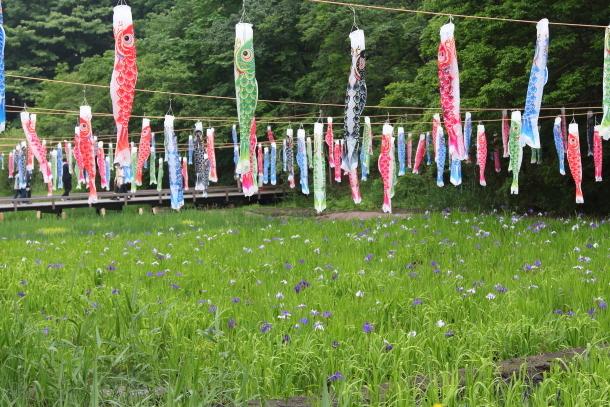 里山ガーデン 5月00014683