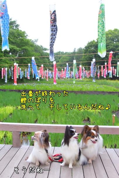 里山ガーデン 5月00014622