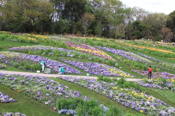 里山ガーデン00012024