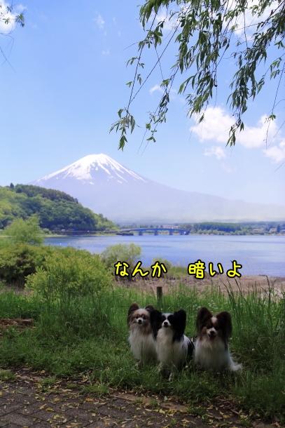 河口湖00016895