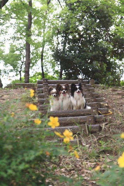 東高根森林公園 紫陽花100020882