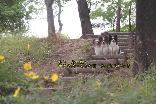 東高根森林公園 紫陽花100020907