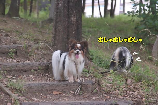 東高根森林公園 紫陽花100020910