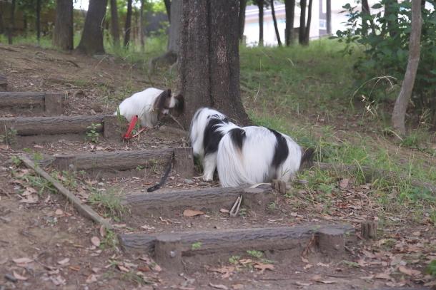 東高根森林公園 紫陽花100020908