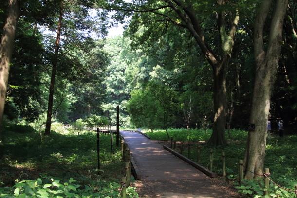 東高根森林公園200020947