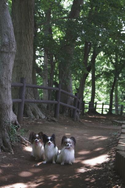 東高根森林公園200021008