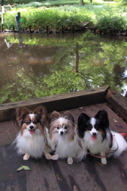 東高根森林公園 紫陽花100020809