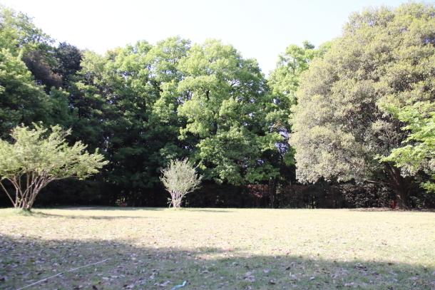 東高根森林公園00014800