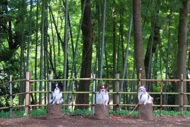 東高根森林公園 紫陽花100020821